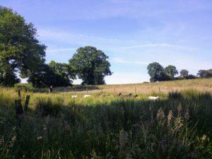 photo moutons
